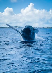 Whale Watching Bermuda
